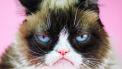grumpy cat won