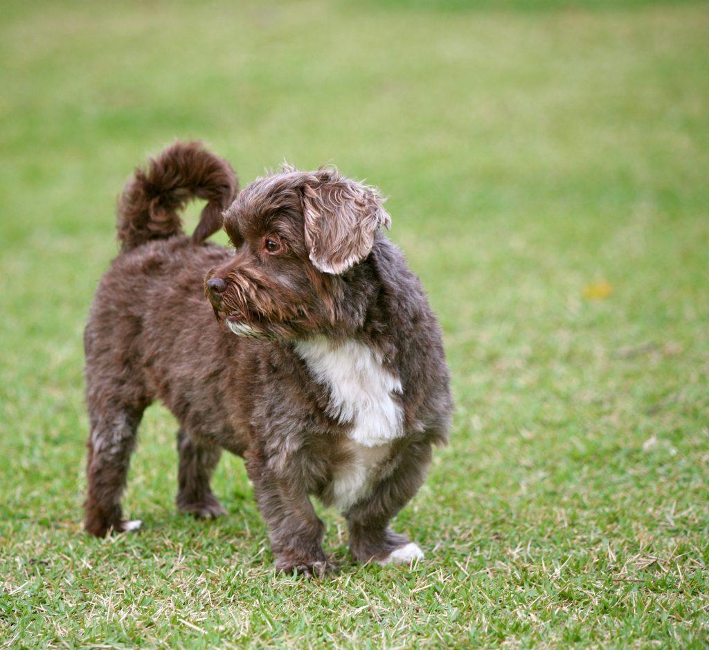 Schattige hond na metamorfose
