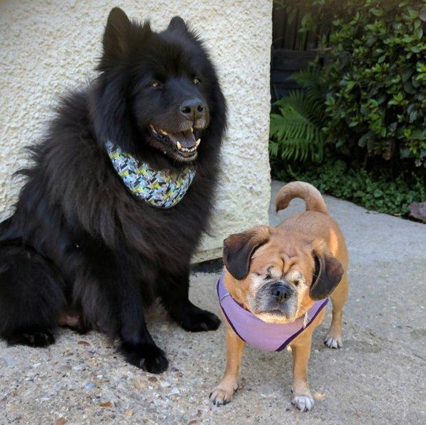 Goede Deze blinde hond heeft haar eigen blindengeleidehond en het is te OE-07