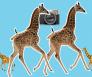 baby giraffe pose instagram