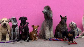Netflix serie dogs