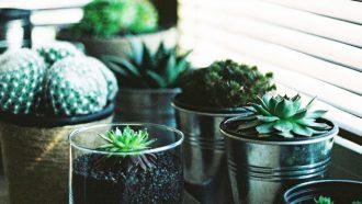 Makkelijke plantjes op studentenkamer