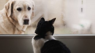 hond kat knuffelen video