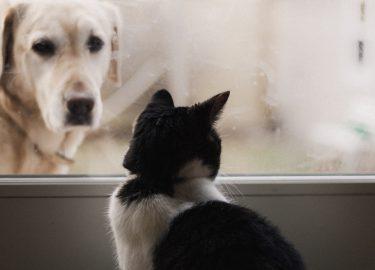 hond kat knuffelen video