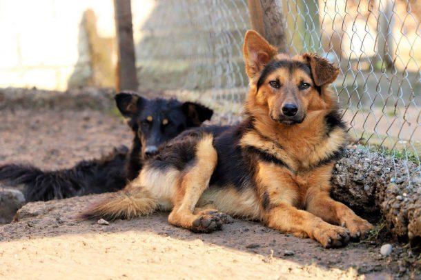 Adopteer asielhond