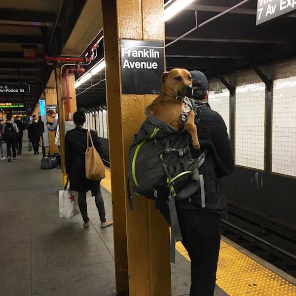 hond tas New York