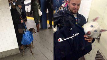 honden new york metro tas