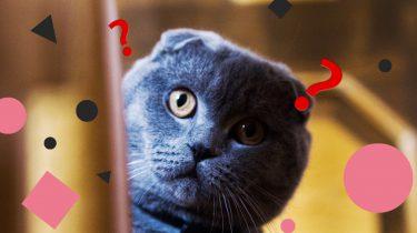 cats trailer reacties