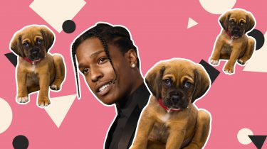 rappers mey puppy's