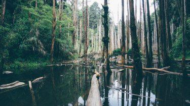 Amazonegebied bosbranden Nederland