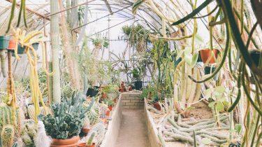 makkelijk onderhouden planten