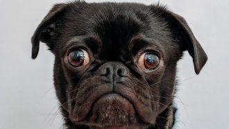 honden mensen irritant